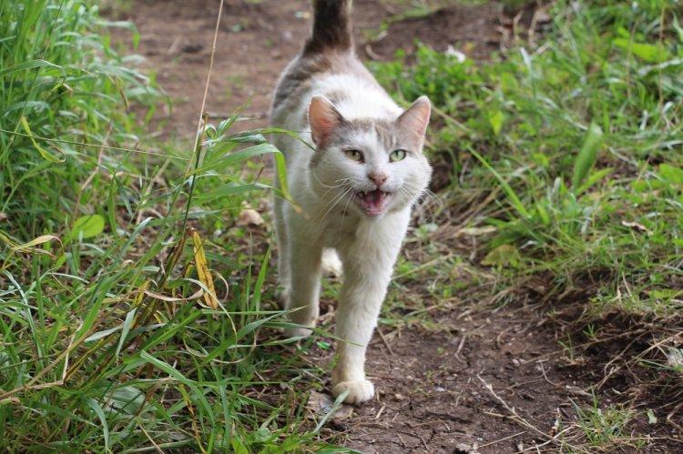 В Стерлитамаке за неделю от укусов животных пострадали 37 человек, от клещей - 13