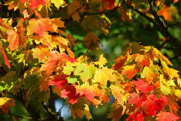 Осенью вБашкирии будет дополнительный выходной