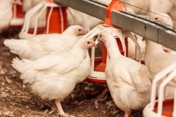 Новый мясоперерабатывающий завод запущен в Башкирии