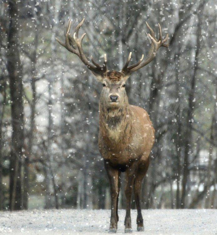 ВБашкирии инспектор поохране природы охотился всвоем заказнике