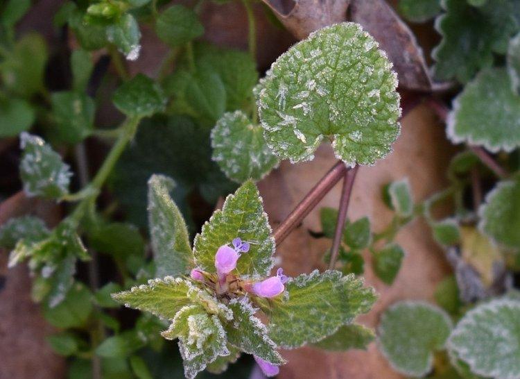 В Башкирии ожидаются заморозки и порывистый ветер