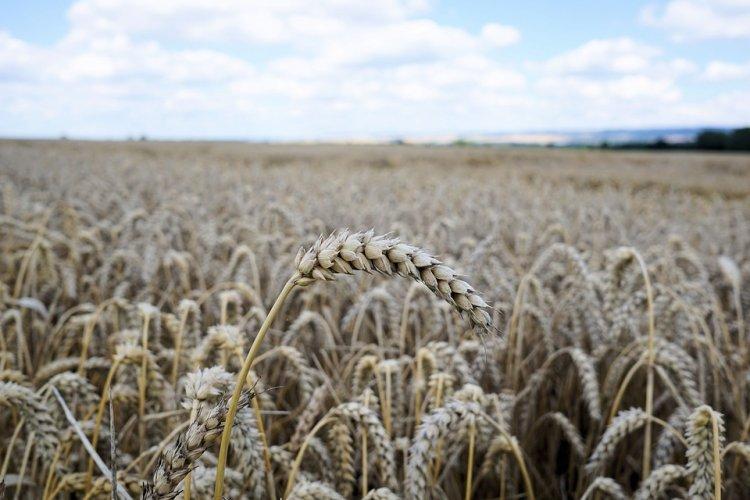 В Башкирии ждут второй миллион тонн зерна нового урожая