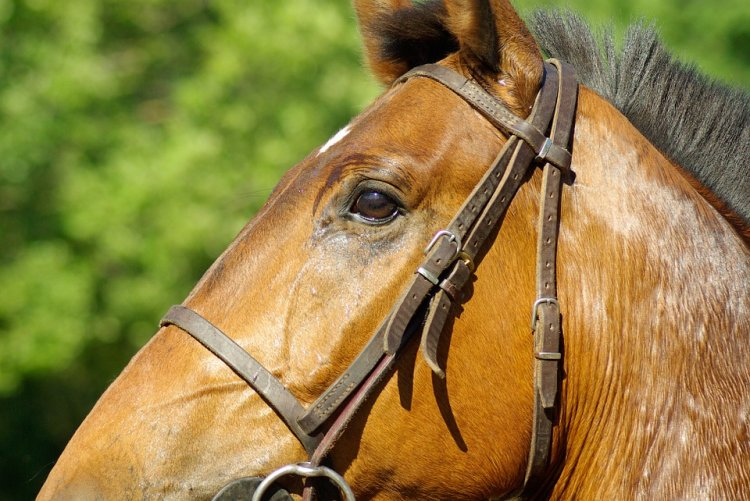 В Стерлитамакском районе 22-летний бродяга пытался украсть лошадь