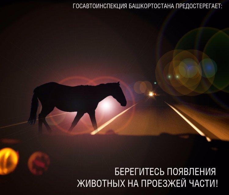 Два ДТП с участием животных произошло за сутки в Башкирии