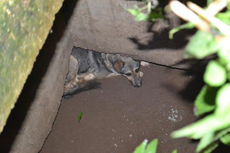 Уфимские спасатели вытащили собаку из 3-метрового колодца