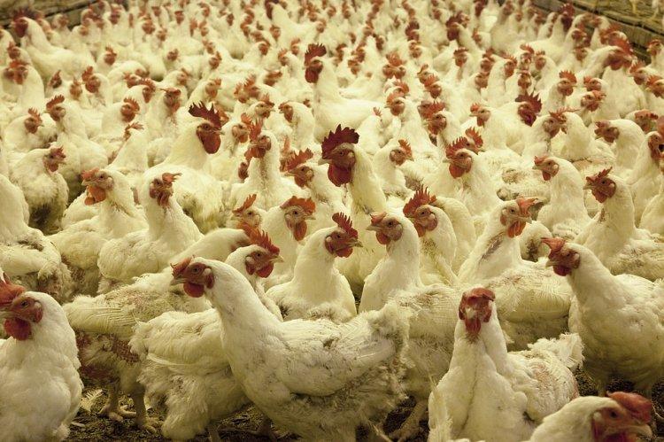 В Башкирии горела птицефабрика