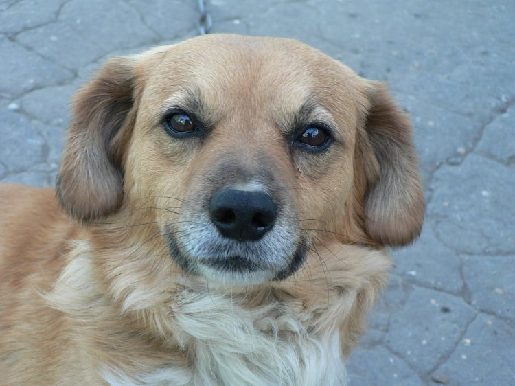 ВБашкирии изквартиры выселили 40 собак