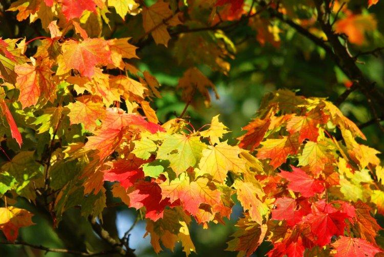 «Бабье лето» в Башкирии закончилось, осень вступает в свои права