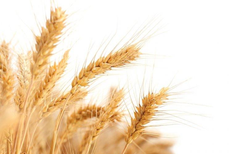 Жатва хлебов в Башкирии завершается