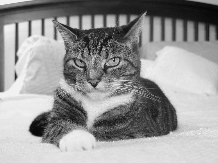 Ученые запретили брать домашних животных в постель