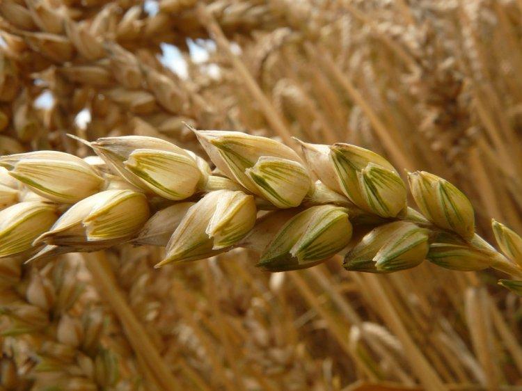 Дмитрий Медведев заявил о рекордном урожае зерна за всю историю России