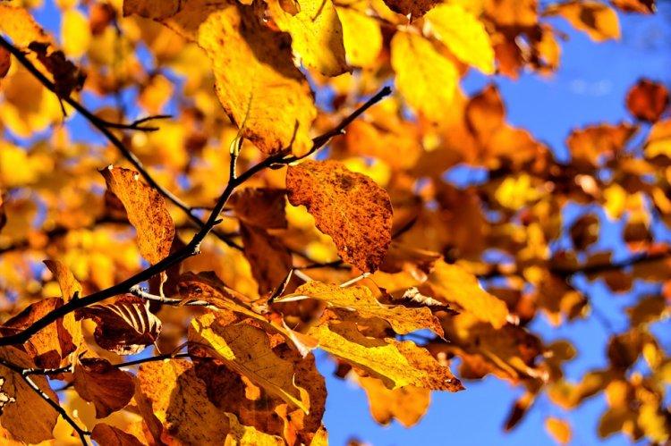 Синоптики рассказали, какая погода ждет жителей Башкирии 6, 7 и 8 октября