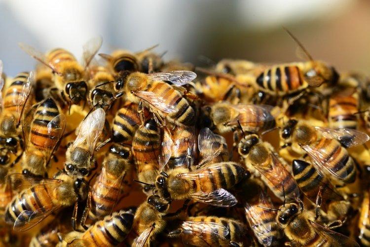 Стало известно, почему пчелы всегда находят прямую дорогу обратно к улью