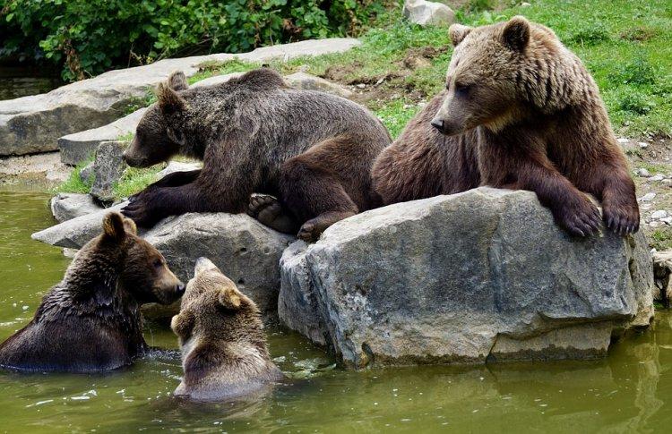 В столице Башкирии начата работа по созданию зоопарка