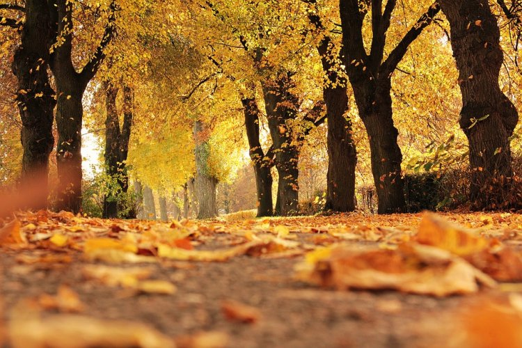 Синоптики рассказали, какая погода ждет жителей Башкирии 12, 13 и 14 октября