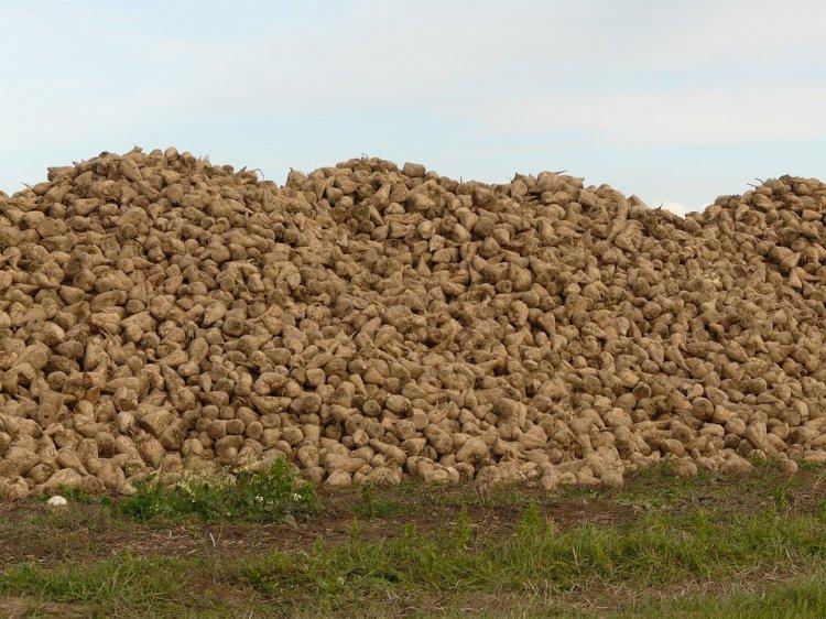 В Башкирии собрано более миллиона тонн сахарной свеклы