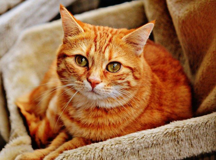 Люди со всего света получил возможность поиграть с котом через Интернет благодаря программисту из Уфы
