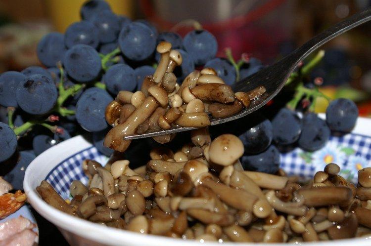 Грибная диета оказалась идеальной для подавления голода