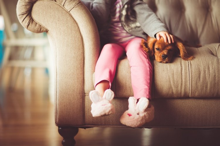 Ученые выяснили, от каких болезней может защитить домашняя собака