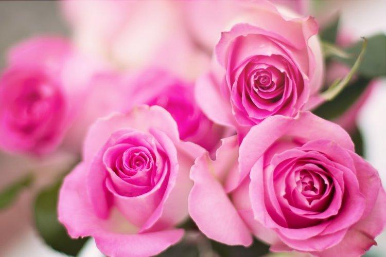 Уфимцы на спор похитили 43 розы из цветочного магазина