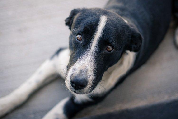 Ирек Ялалов: «ВУфе появится приют для бездомных животных»