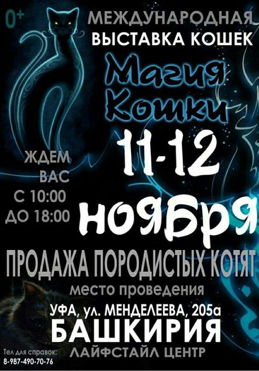 В Уфе пройдет международная выставка кошек «Магия кошки»