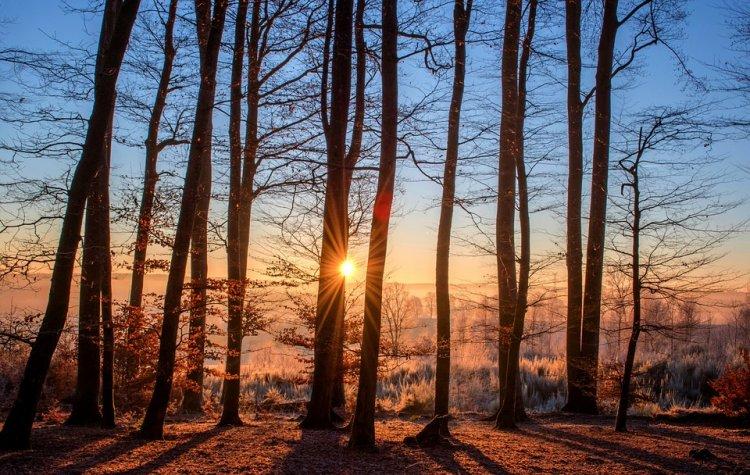 Изощренная месть: женщины избили любовника и бросили голым в лесу
