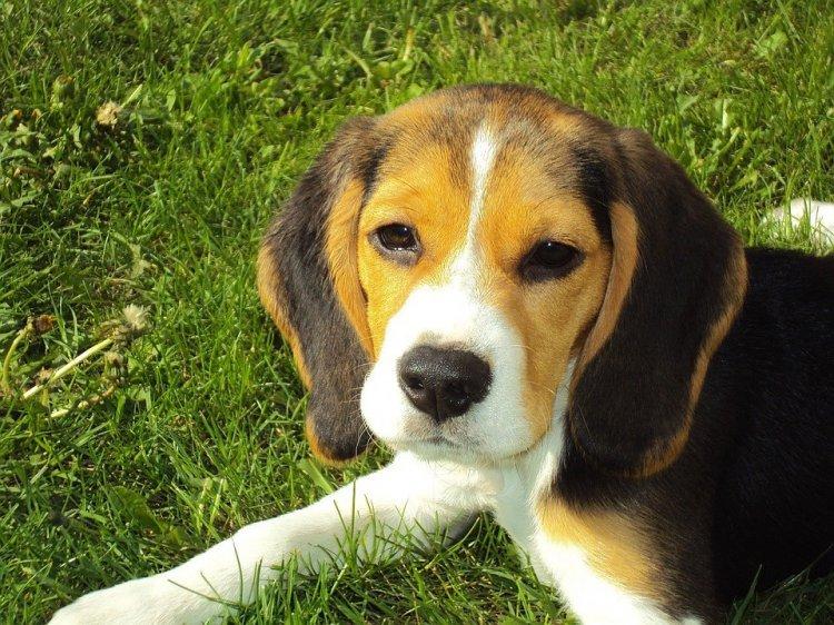 Ученые назвали самые полезные для здоровья породы собак