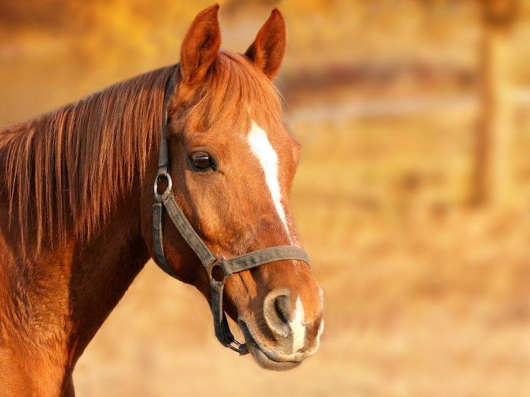 В Башкирии преступники убили пастуха и похитили лошадь