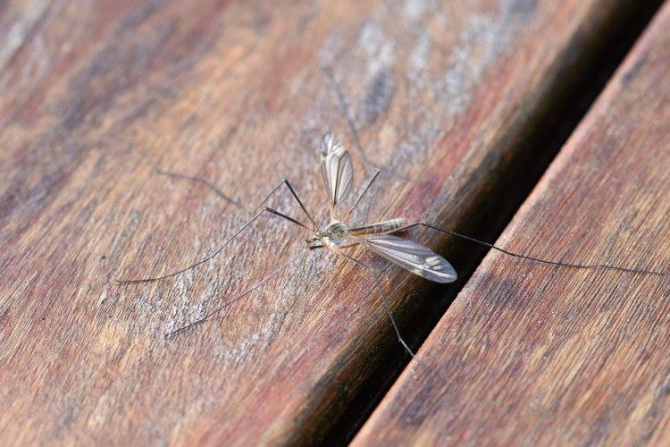 Женщина «окаменела» после укуса комара