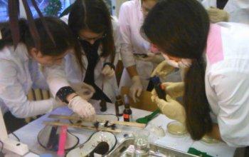 В Стерлитамаке обучают школьников биомедицине