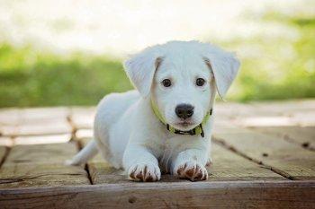 Найдена схема идеальной дрессировки собак