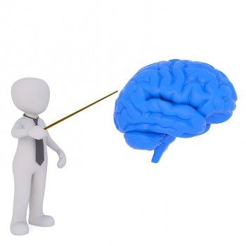 Опровергнут один из главных мифов о человеческом мозге