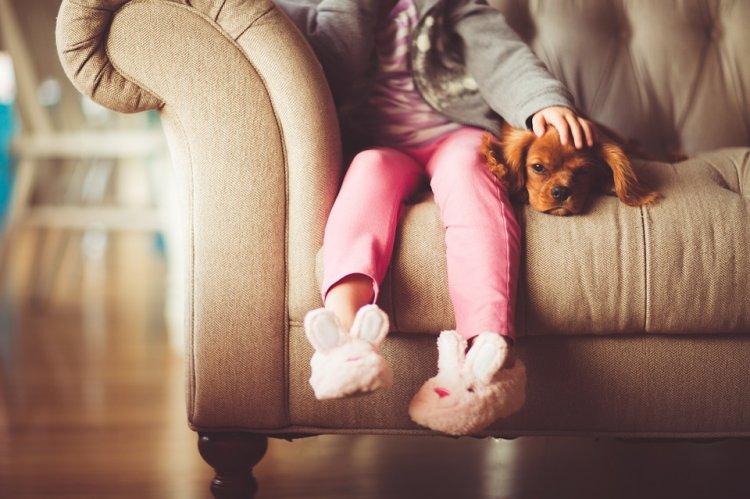 Выявлена новая опасность домашних животных