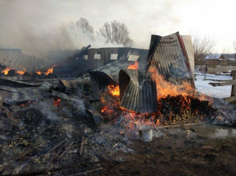 ВБашкирии впожаре  вконюшне сгорело 8 лошадей