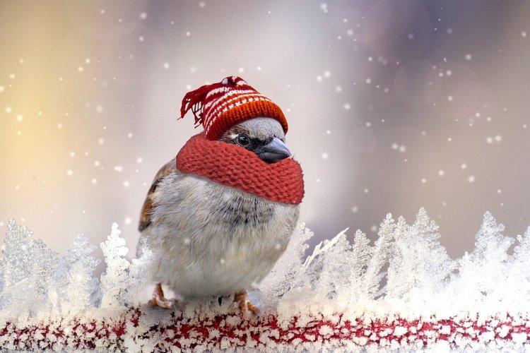 Синоптики сообщили о погоде в Башкирии 18, 19 и 20 декабря