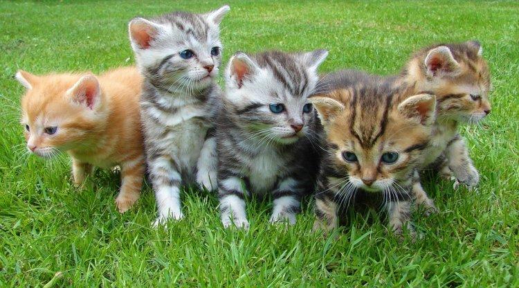 Петербуржцы любят кошек больше, чем собак