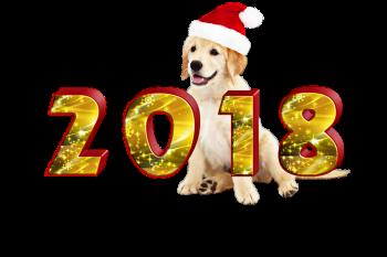 Новогодние приметы на удачу: как встретить Новый 2018 год  - год Желтой Собаки