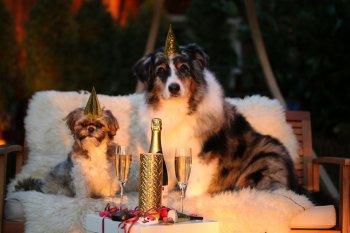 Новогодние приметы. Как встретить год Собаки 2018