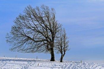 МЧС предупреждает о сильном ветре в Башкирии