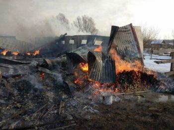 В Башкирии при пожаре в конно-спортивном клубе погибли 8 лошадей