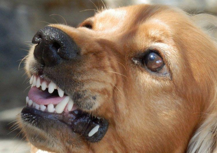 В Стерлитамаке за неделю животные покусали 39 человек