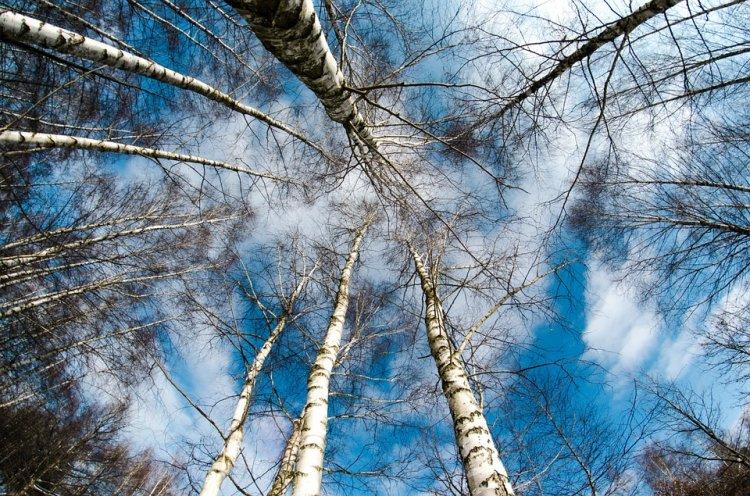 В воздухе Стерлитамака зафиксировано превышение ПДК по диоксиду азота