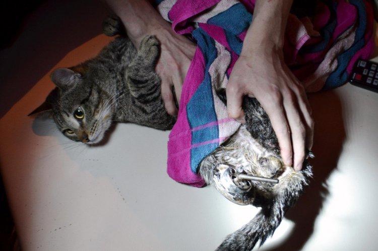 В Уфе кот застрял в решетке сливного отверстия — его выручили спасатели