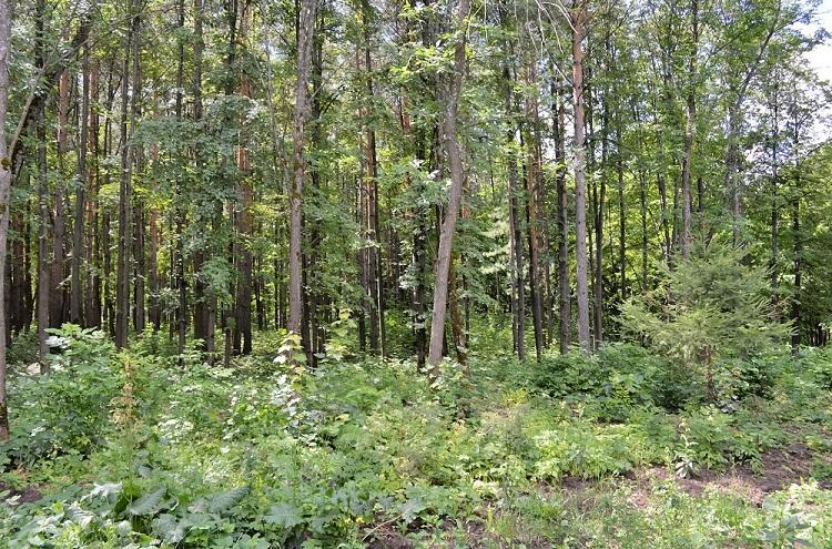 В Башкирии депутат осужден за незаконную вырубку леса