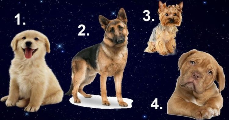Выберите собаку и узнайте, какой мужчина для вас идеально подходит