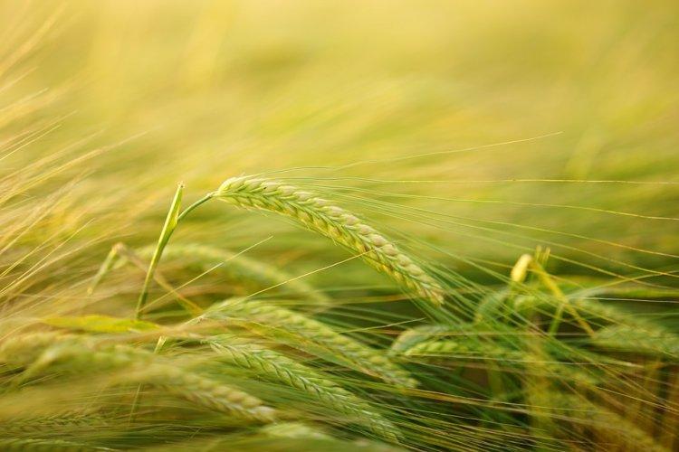Башкирские аграрии перенимают у немцев опыт органического сельскохозяйственного производства