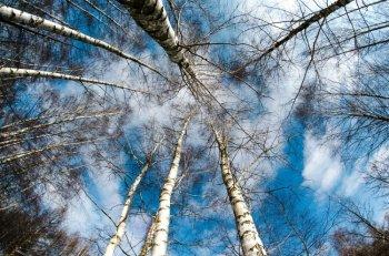 В воздухе Стерлитамака зафиксировано превышение вредных веществ