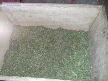 В Кугарчинском районе Башкирии сельчанин заготовил 12 кг марихуаны