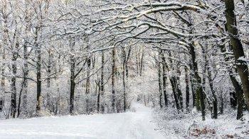 Синоптики сообщили о погоде в Башкирии 23, 24 и 25 февраля